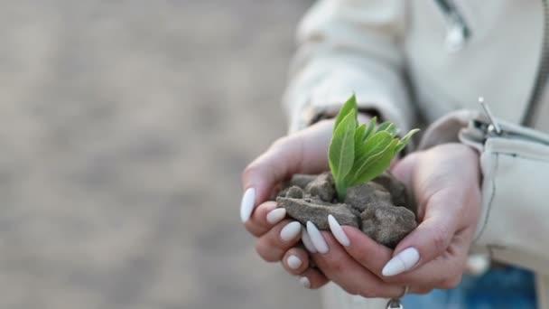 Ruce držící stromek s krásným západem slunce, koncepcí nového růstu a udržitelného zemědělství, zdravím životního prostředí, péčí o mateřskou zemi