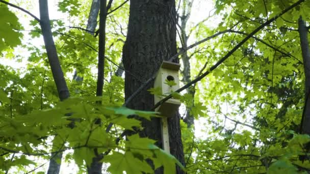 Homemade wooden birdhouse or birds and squirrels on the trunk of a spruce tree. Care for wild birds in the forests. Natural lighting summer. Floral background
