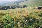 Fotografie field flowers on green lawn