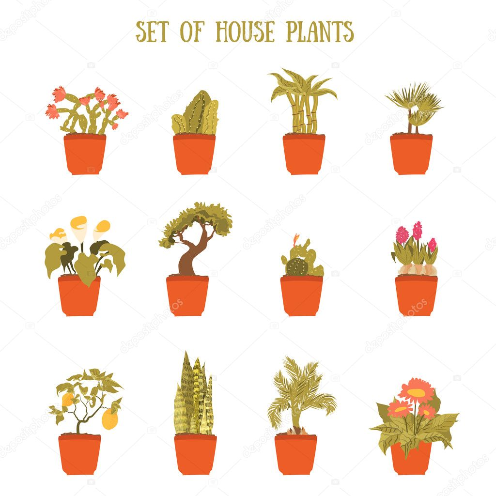 Plant in a pot vector set, decorative element for home decor. Isolated plant collection.
