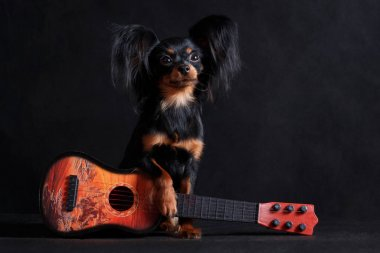 Little romantic musical dog troubadour with a guitar