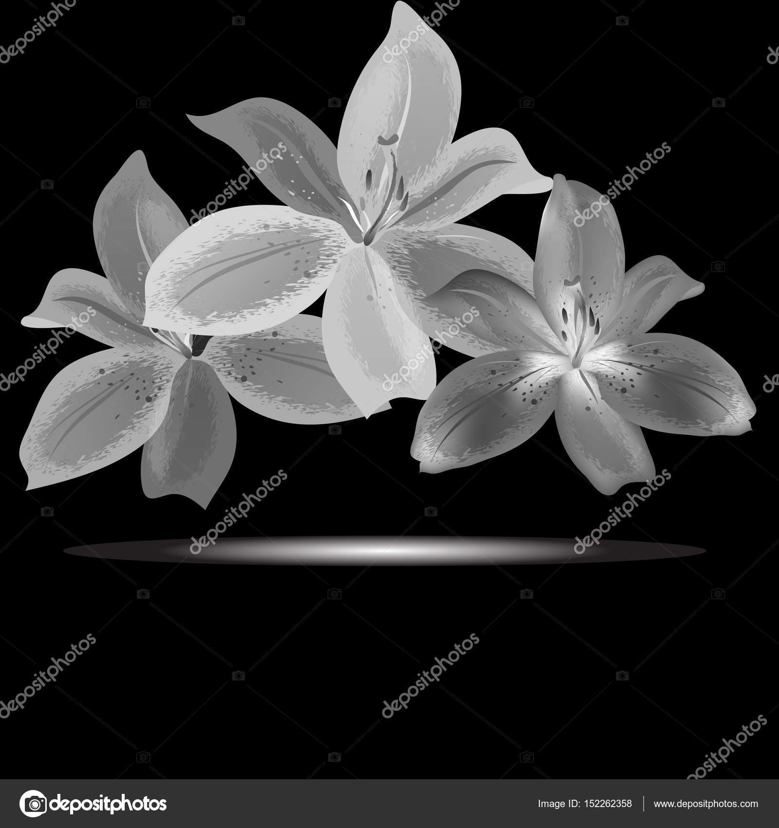 Monochrome Lilies Flowers Stock Vector Andrew13 152262358