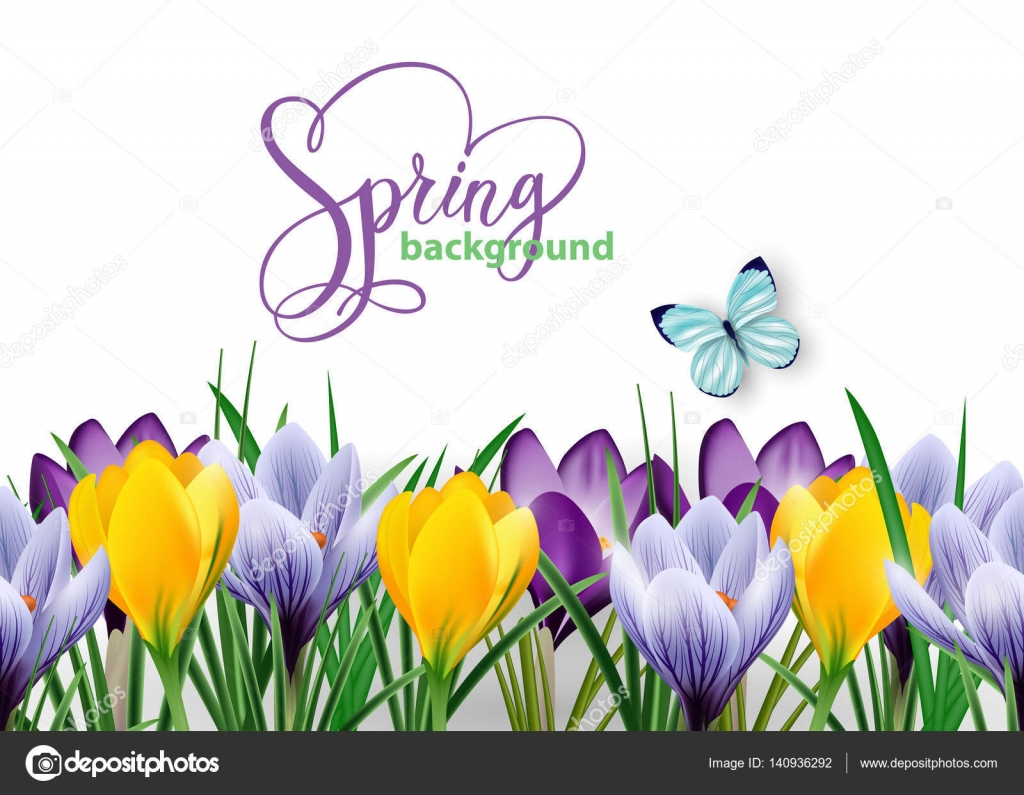 Seamless Horizontal Border With Spring Flowers Crocuses And