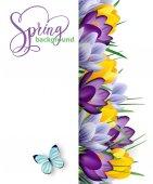 Jarní pozadí s kvetoucí jarní květiny, krokusy. Vektor