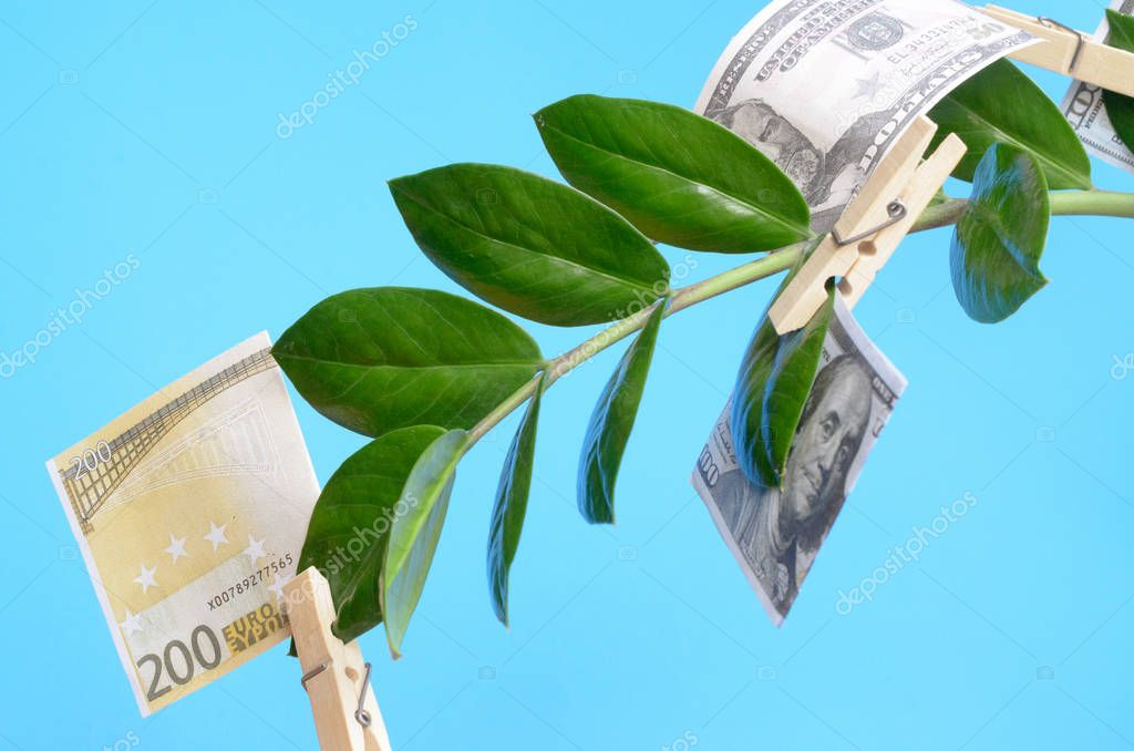 Money bills on clothespins on a branch of a money tree on a blue background.