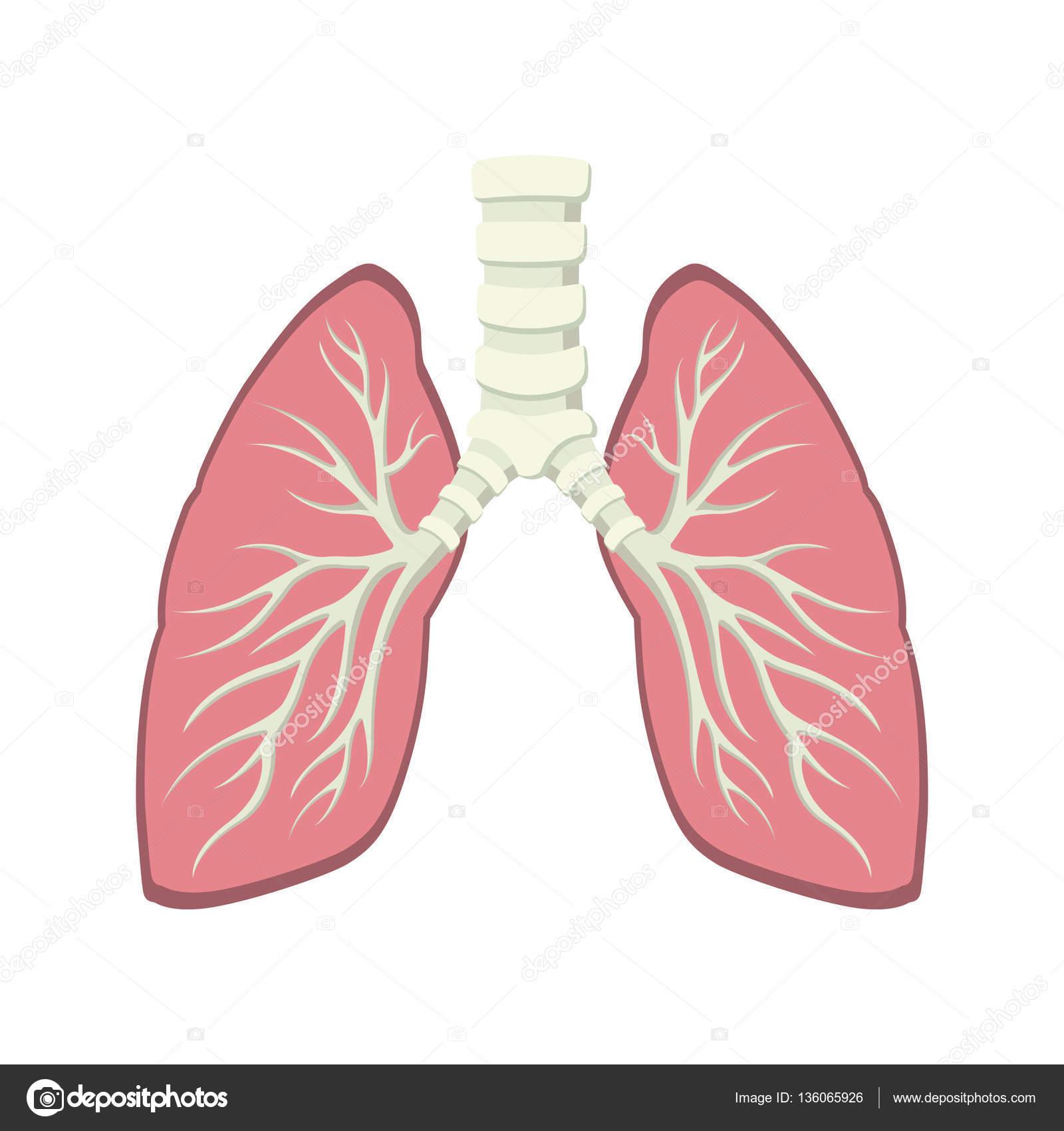 Inside Human Lung Anatomy Stock Vector Funwayillustration 136065926