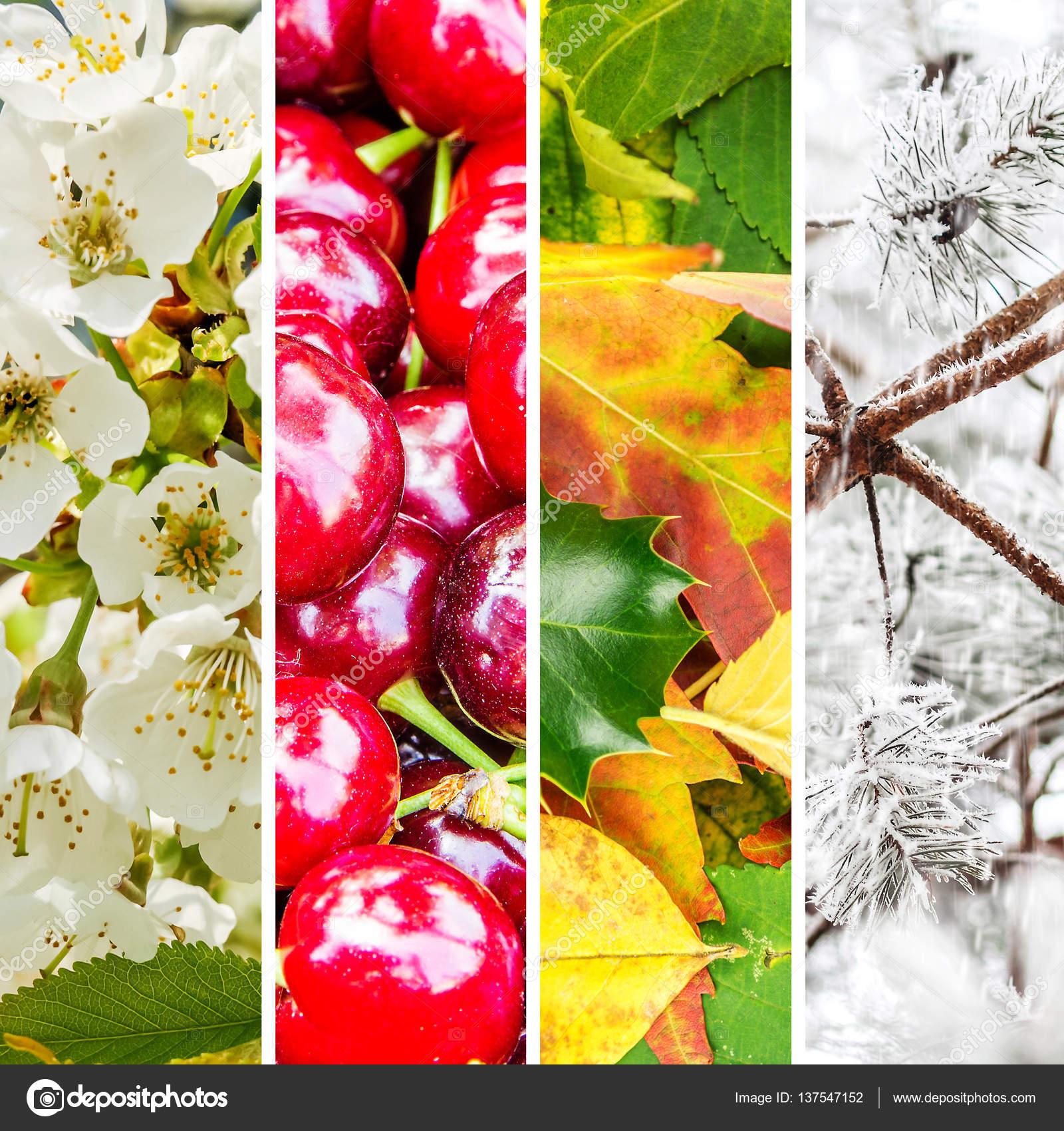 collage de cuatro estaciones — Foto de stock © jansucko #137547152