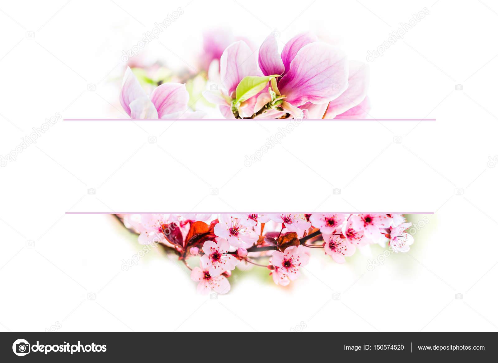 blühende Magnolie Blume und Kirsche Baum Blumen Rahmen — Stockfoto ...
