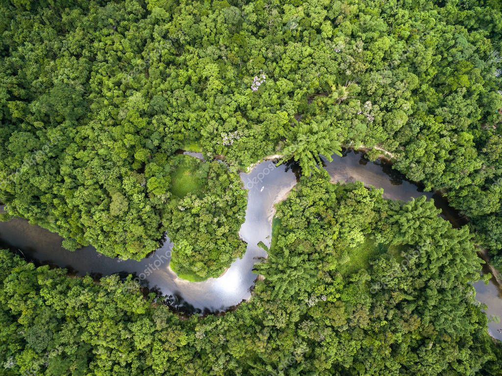 view of river in rainforest