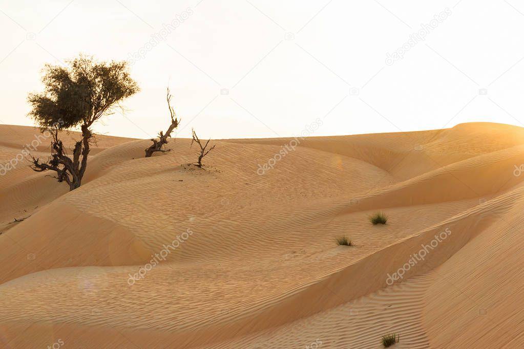 sand-dunes-orgy-videos-saudi-porn