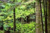 Misty bagnato mattina nei boschi. foresta con tronchi dalbero e tour