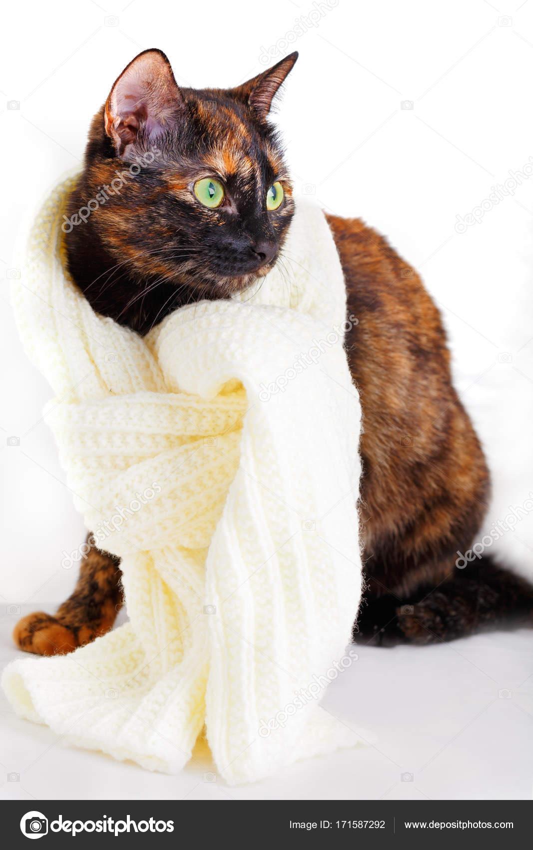 28daad52e591 Γάτα σε ένα πλεκτό μάλλινο κασκόλ