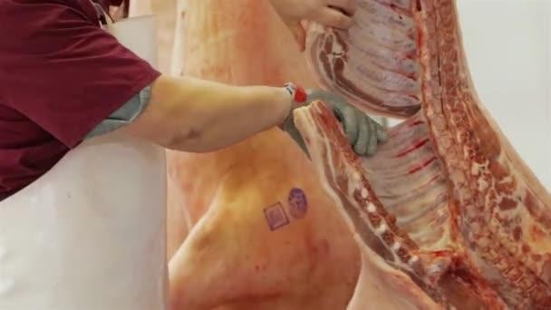 Dělník připravuje jatečně upravené tělo prasete na cinging. Masný obchod.