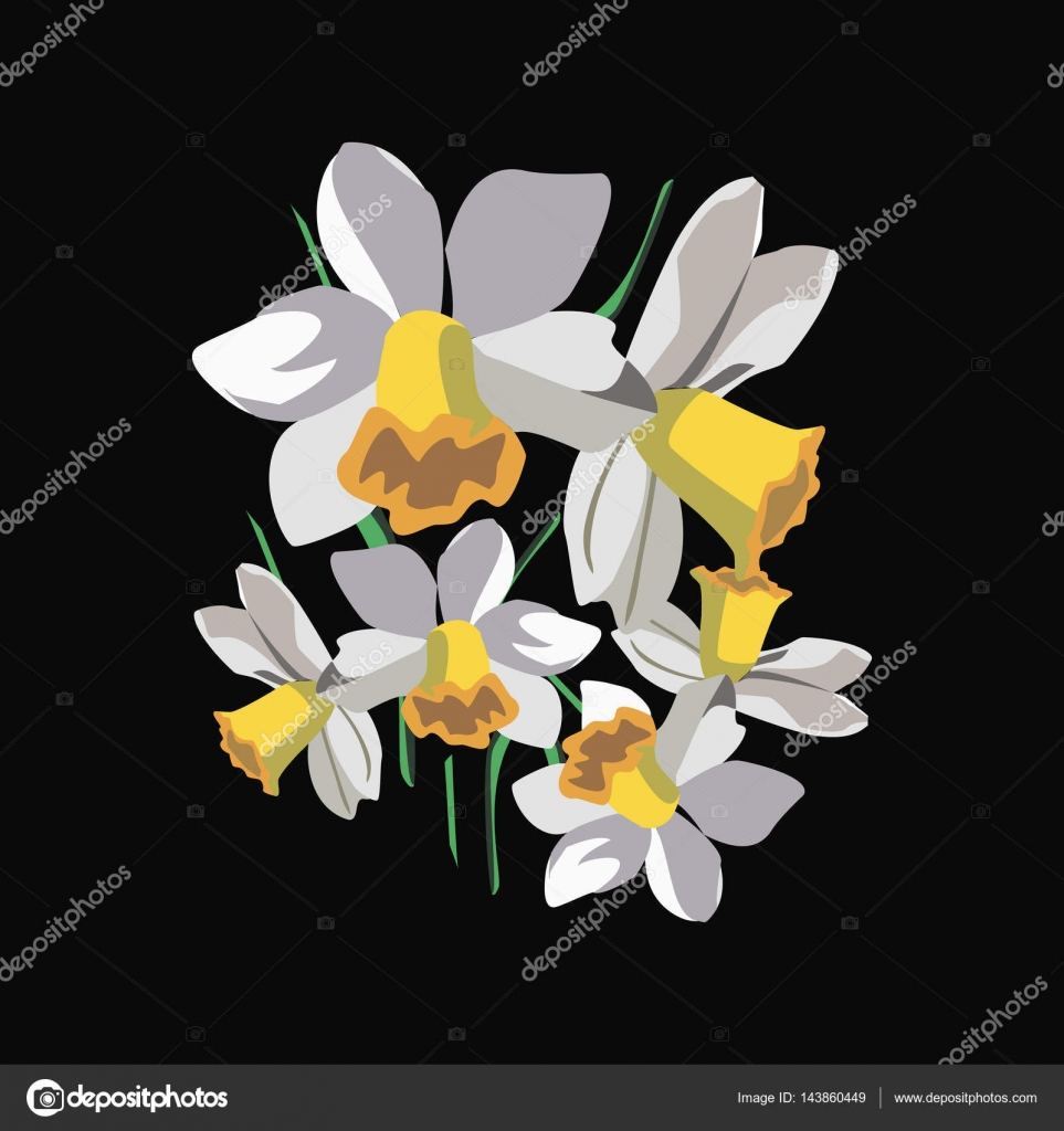 Bouquet of white daffodils flowers design for card stock vector bouquet of white daffodils flowers design for card stock vector mightylinksfo