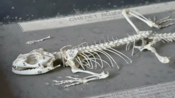 detail z plazů kostry v laboratoři
