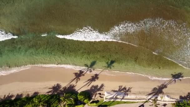 beautiful photography of exciting ocean with bursting wave near coastline with exotic trees on island maui,hawaii