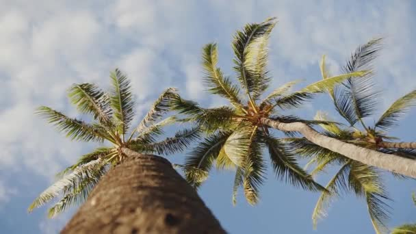 looking up at palm trees on the background of blue sky with clouds on maui,hawaii