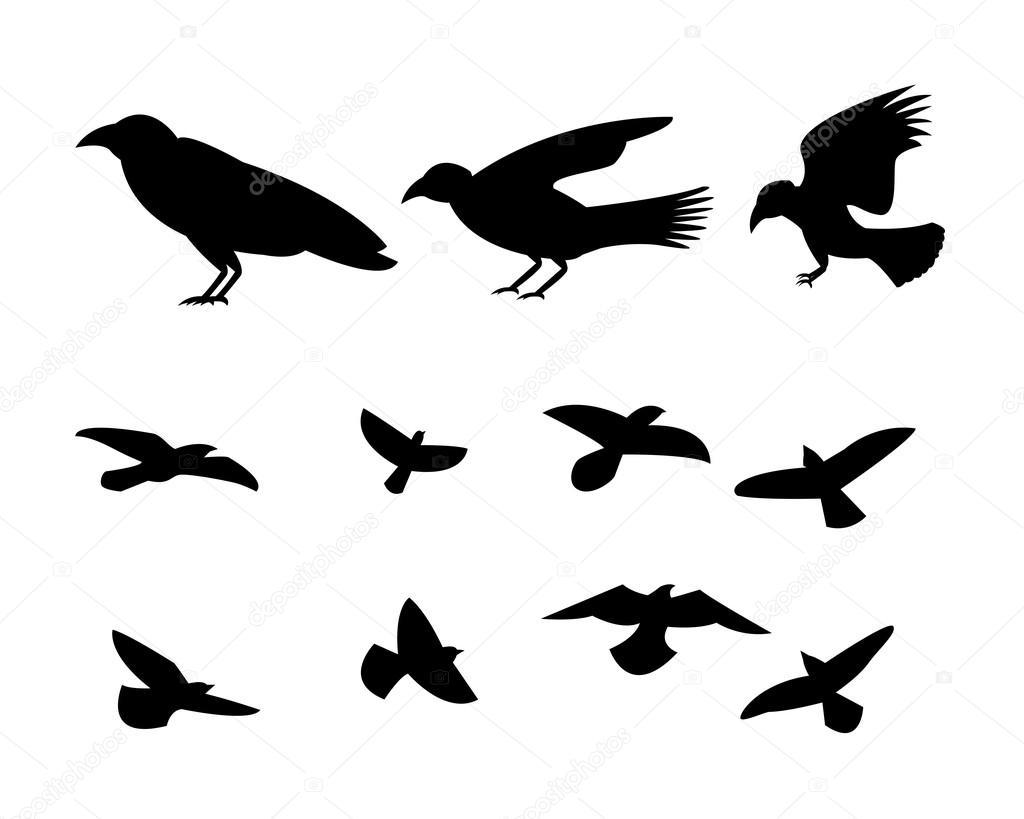 Silhouette d oiseau corbeau volant vector image - Dessin oiseau en vol ...