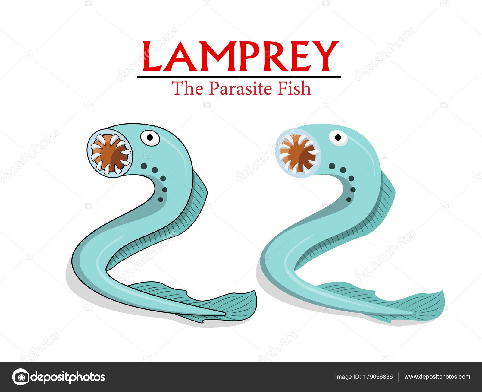 lampery parazita)
