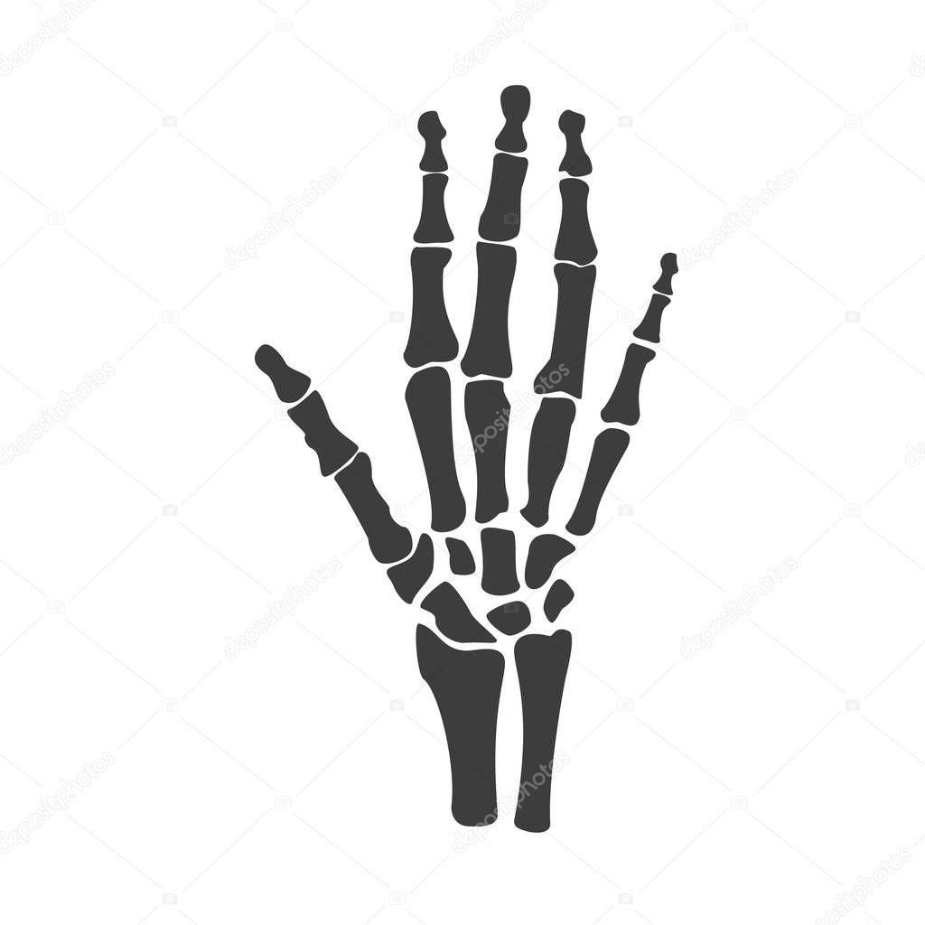 Huesos de la mano del vector — Vector de stock © viktorijareut ...