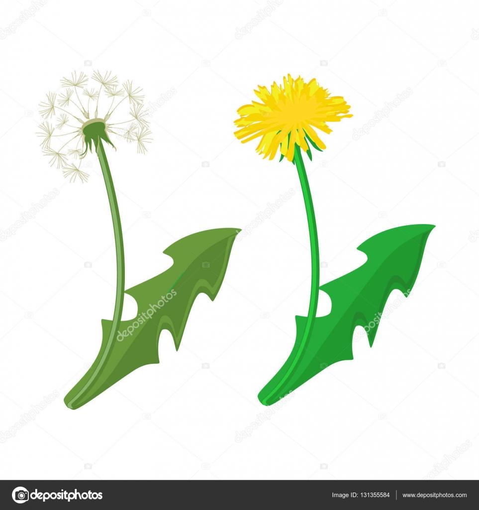 dandelion vector icon stock vector viktorijareut 131355584 rh depositphotos com dandelion vector black and white dandelion vector png