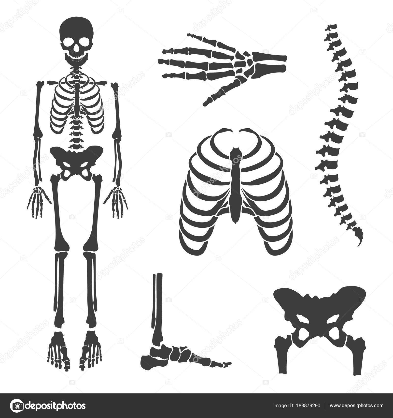 Menschliches Skelett raster — Stockfoto © viktorijareut #188879290