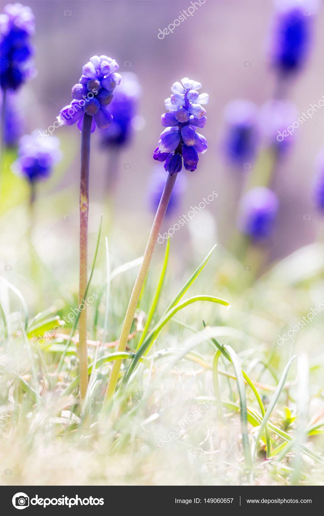 Цветы на солнечной поляне