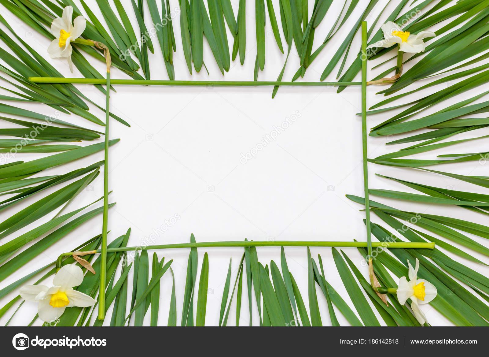 Fiori Gialli Frasi.Cornice Rettangolare Floreale Fiori Gialli Narcisi Foglie Verdi