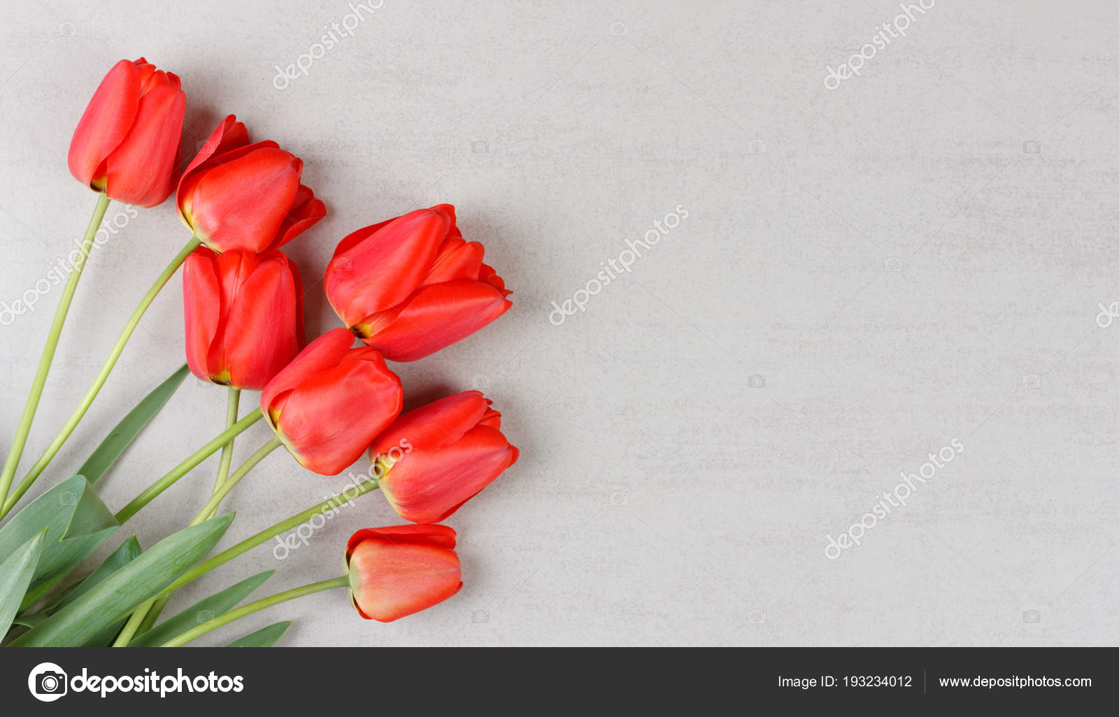 Bouquet Red Tulips Grey Background Copy Space Mock Birthday