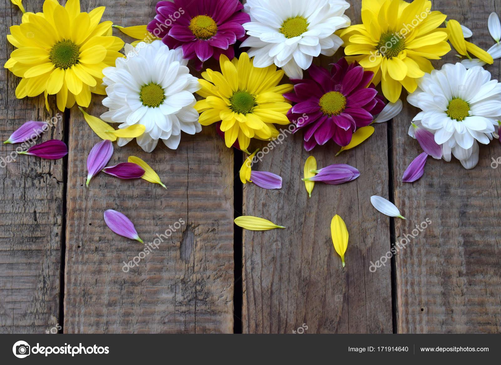 Rosa Gelben Und Weissen Kamille Blumen Grenze Geburtstag Muttertag