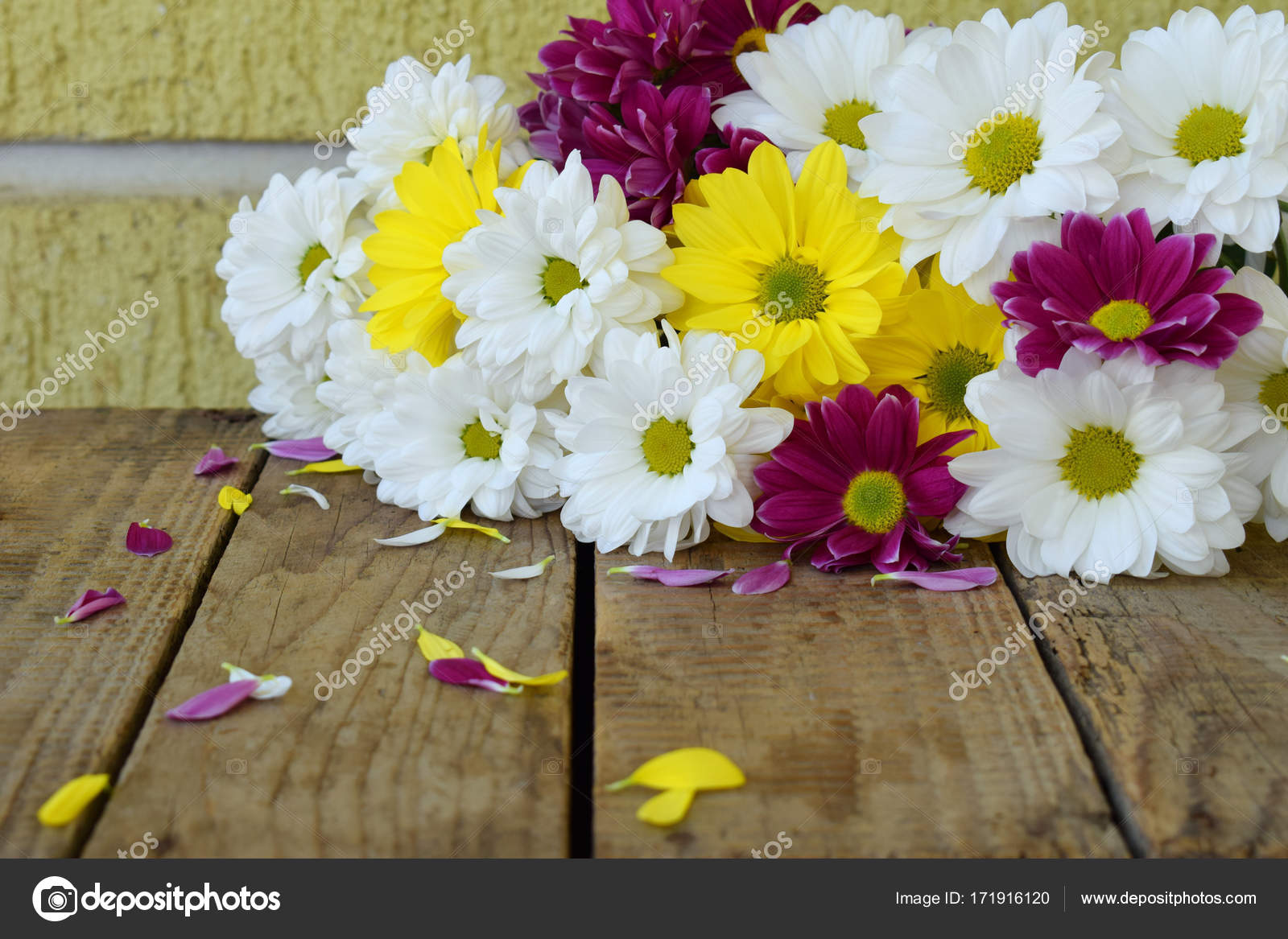 Pink Yellow And White Chamomile Flowers Birthday Mothers Day