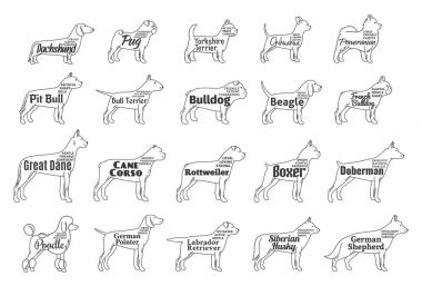 Vector dog icons collection isolated on white. Dogs breeds names