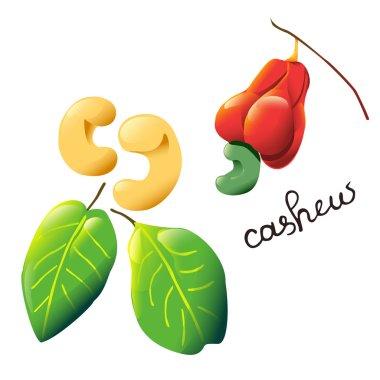 colorful cartoon cashew