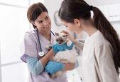Veterinární lékař, chovat jako v bavlnce majitel a kočka na klinice