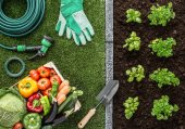 Kertészet és az élelmiszer-termelés
