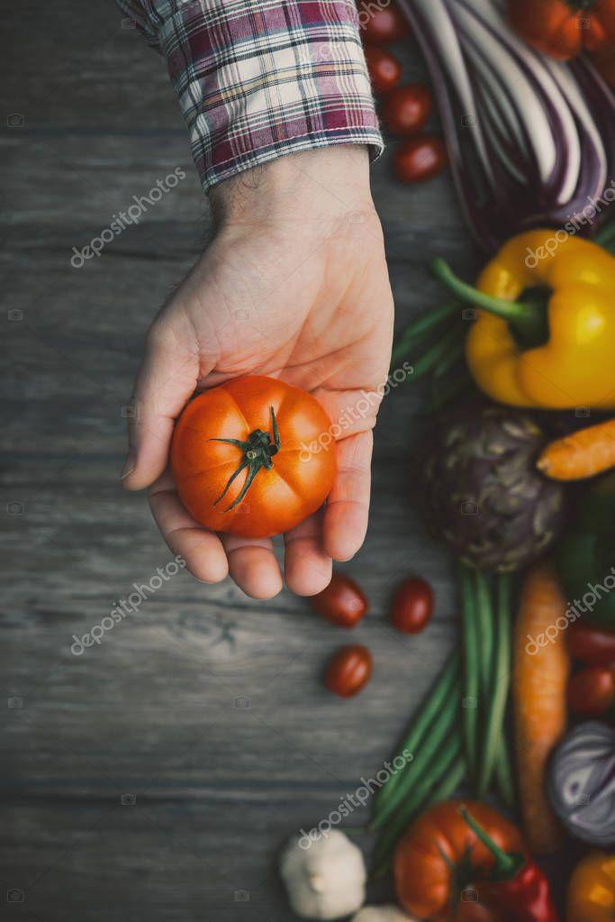 Freshly harvested tomatoes