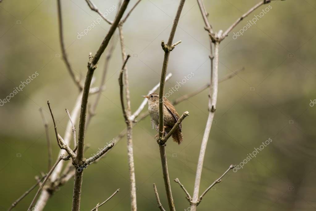 Cormorant (Phalacrocoracidae) spotted outdoors