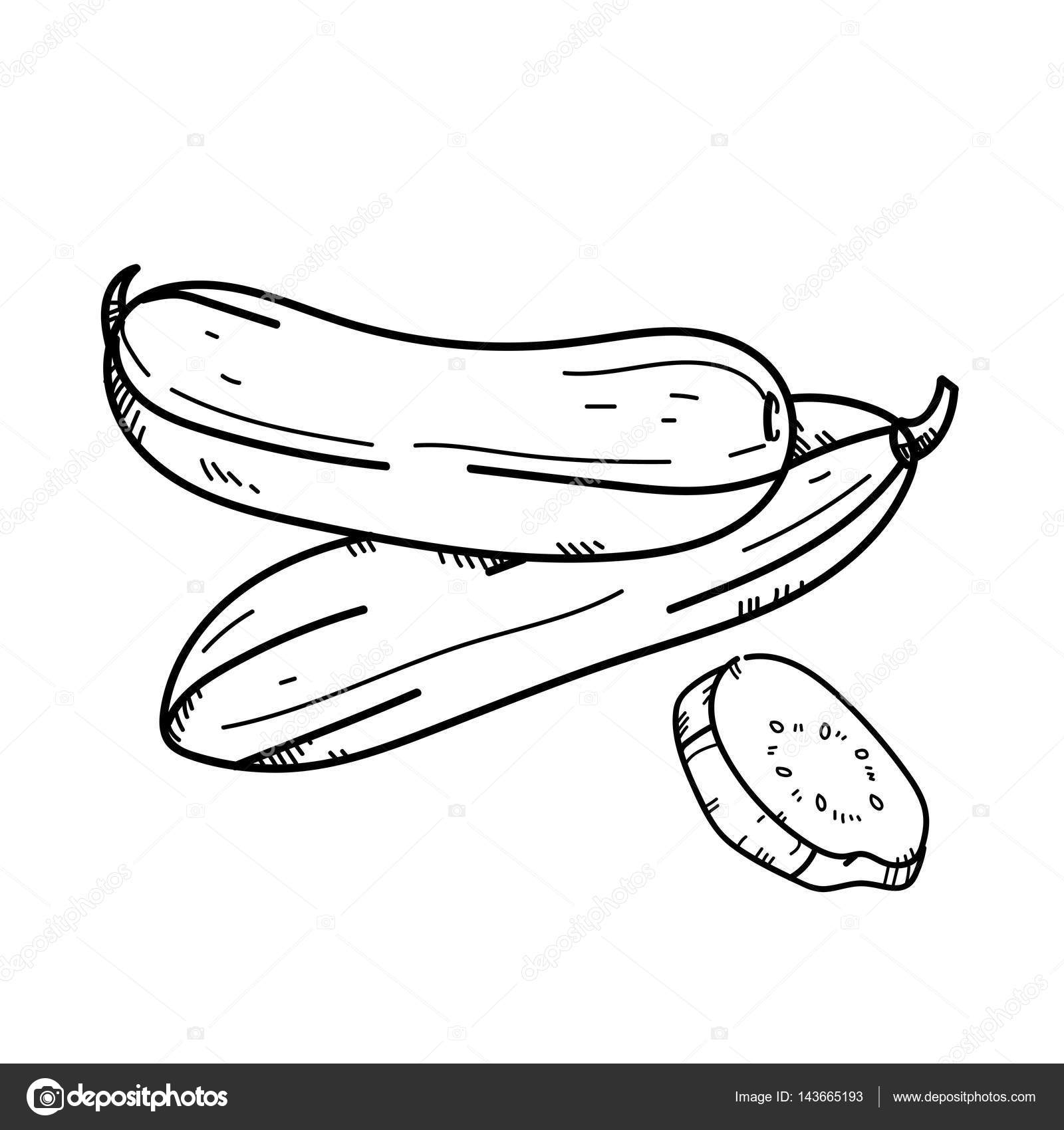 Freehand drawing illustration Cucumber. — Stock Photo ... for Drawing Cucumber  173lyp