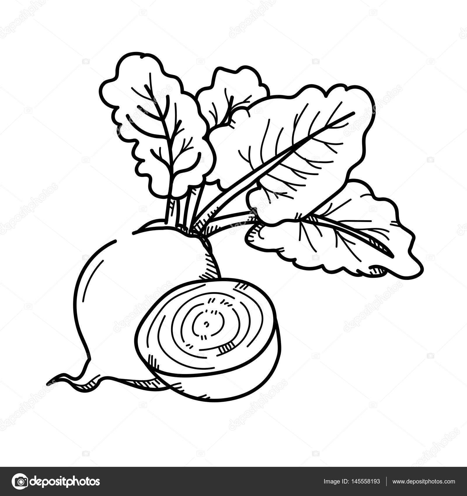 Freehand Drawing Illustration Beetroot Stock Photo
