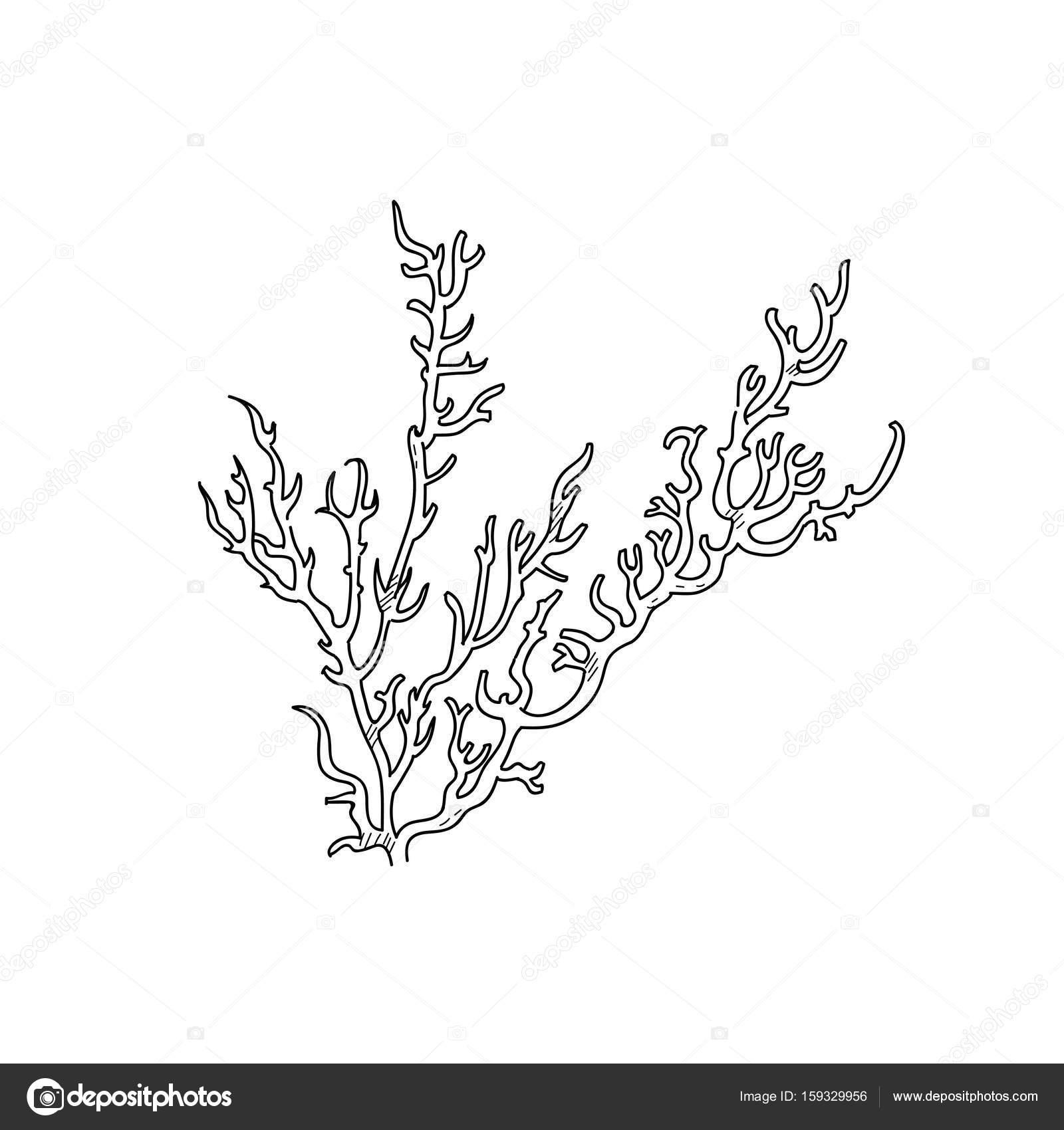 Tiefsee Korallen Hand Gezeichnete Skizze Illustration Design
