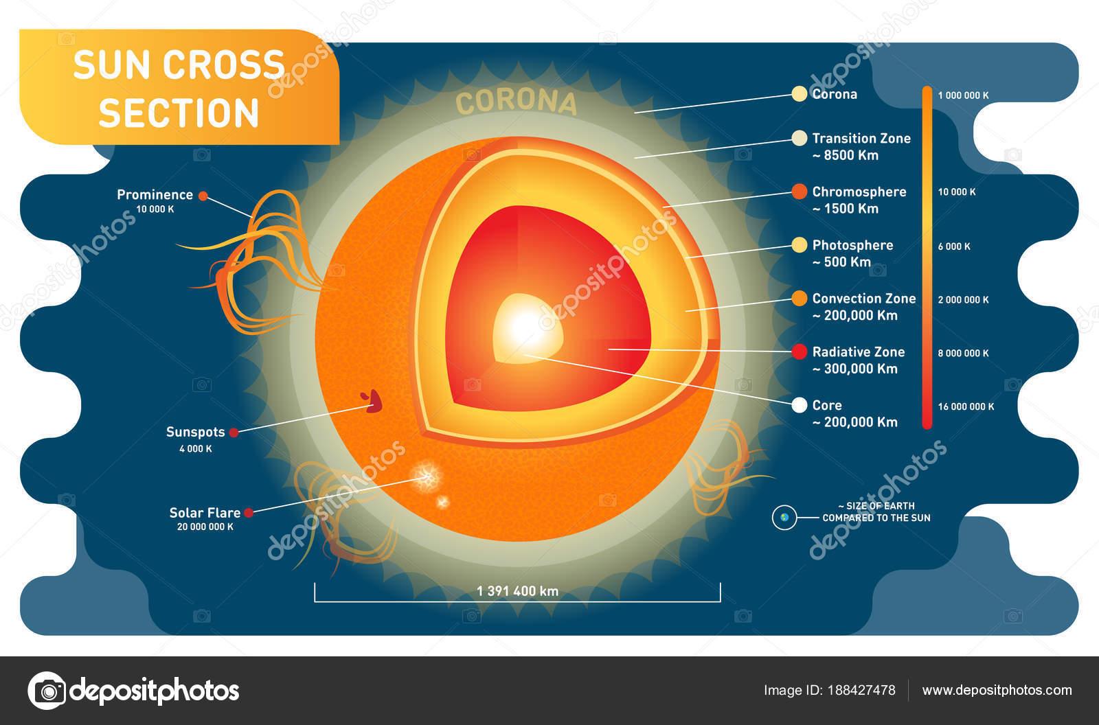pictures sunspots sun cross section scientific vector 3D Sun Diagram
