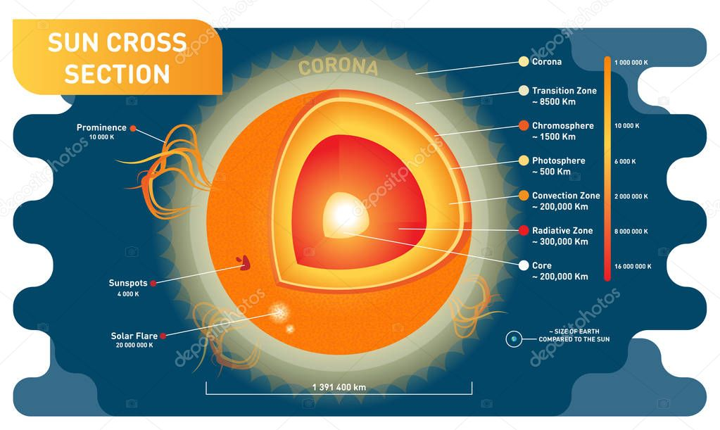 Sun Cross Section Scientific Vector Illustration Diagram With Sun Inner Layers  Sunspots  Solar