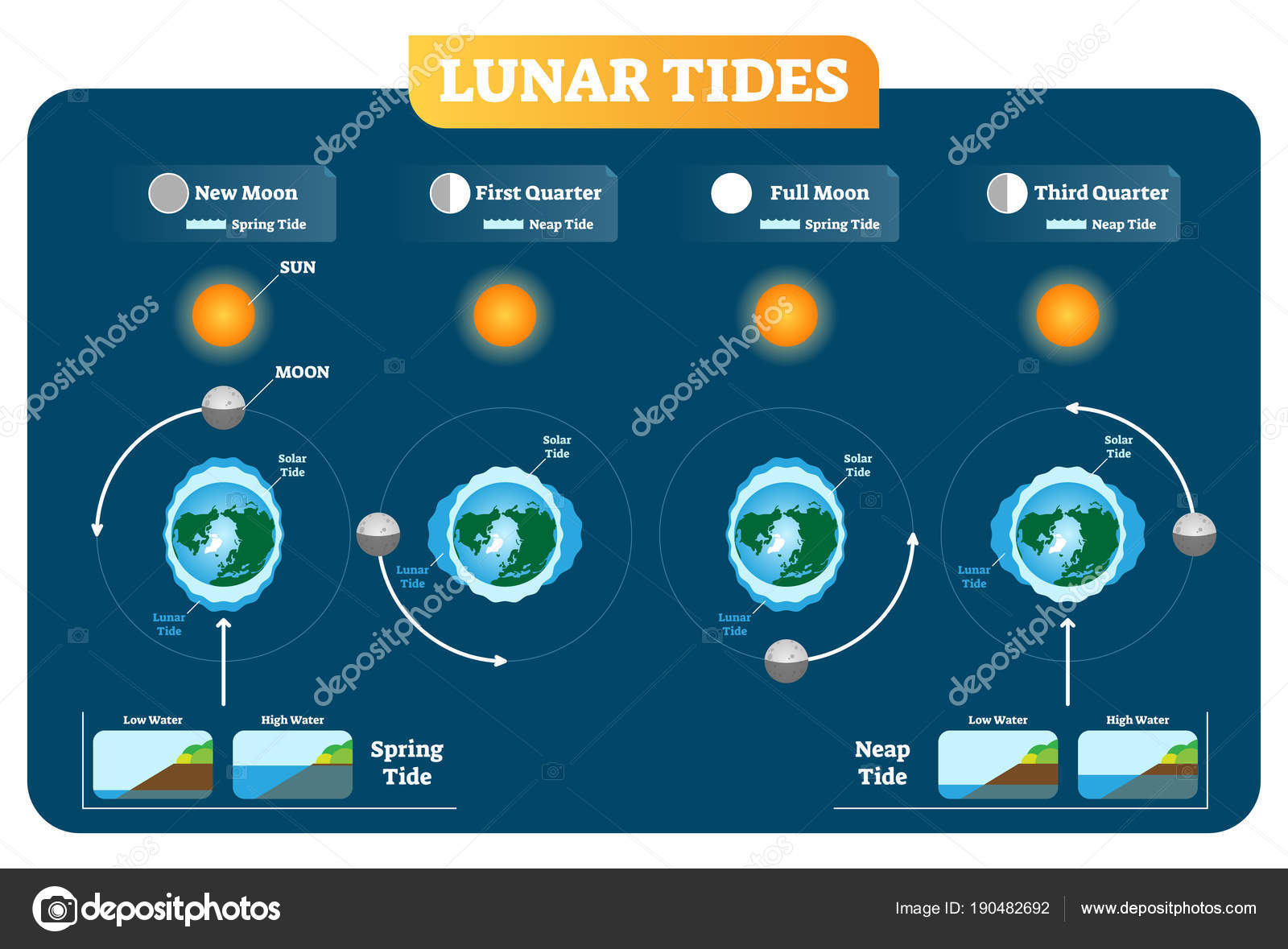 depositphotos_190482692 stock illustration lunar and solar tides vector lunar and solar tides vector illustration diagram poster spring and