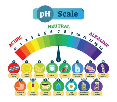 PH Acid Scale Vector Illustration Diagram with Acidic, Neutral and Alkaline examples.