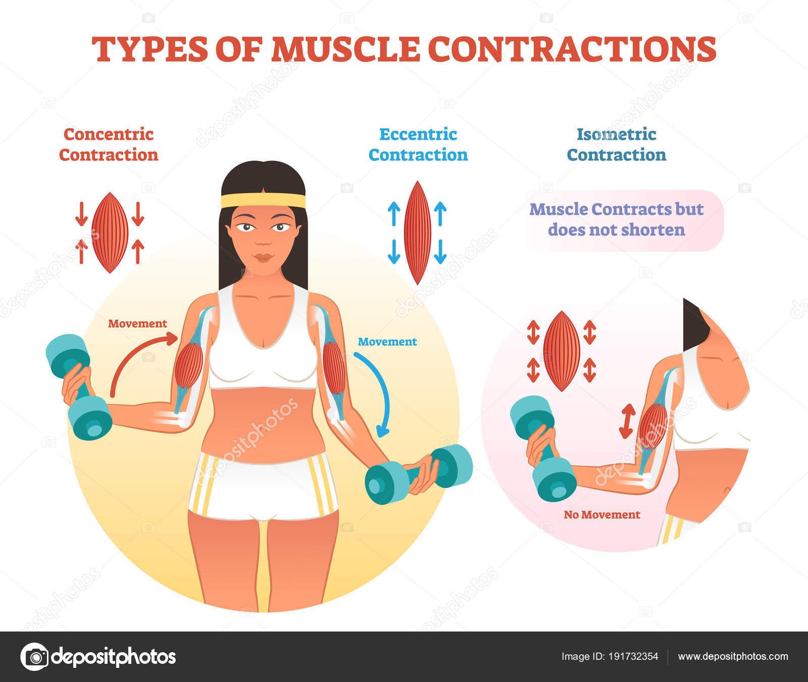 statisk muskelarbejde