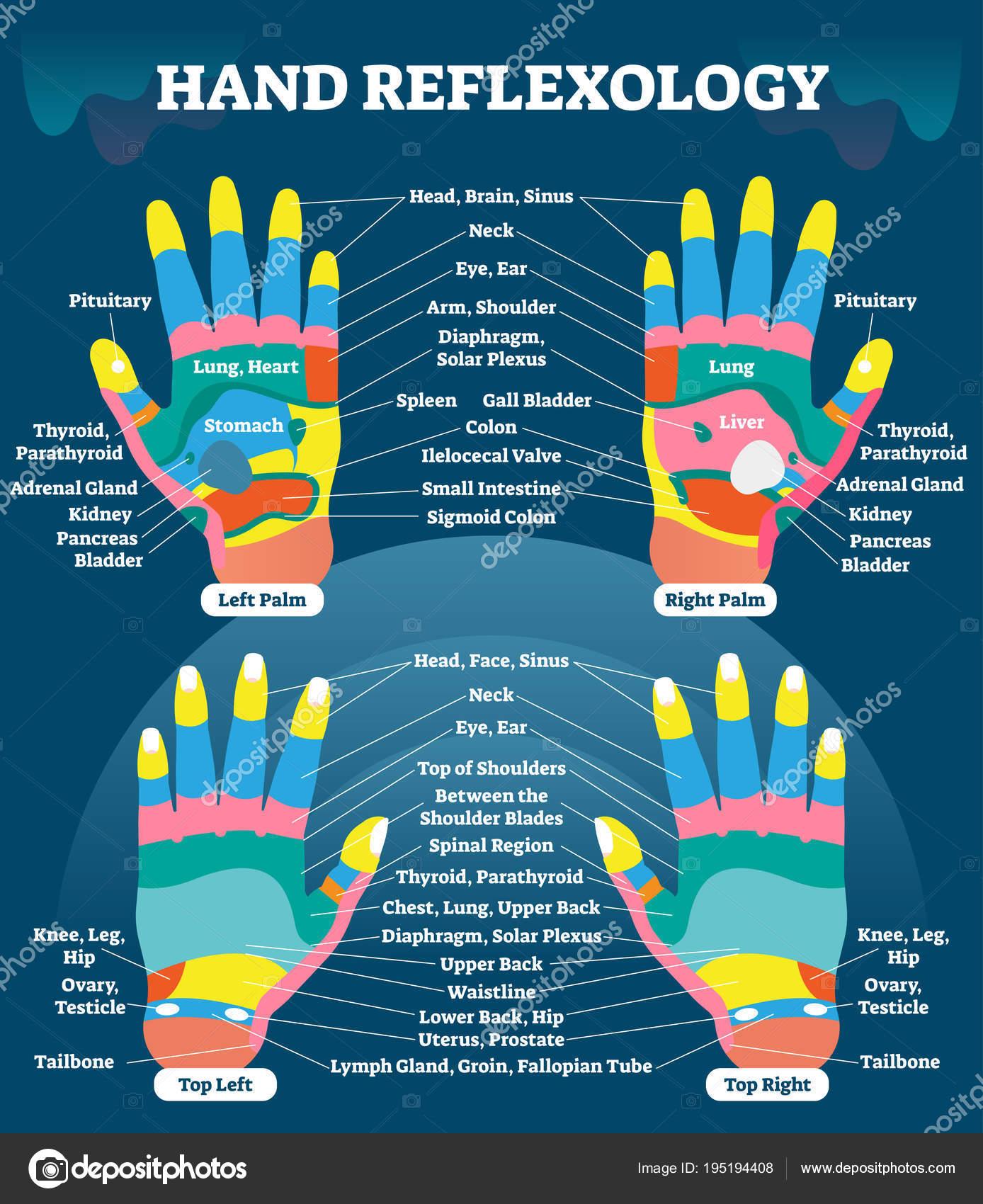 Mano reflexología masaje terapia médica vector ilustración gráfico ...