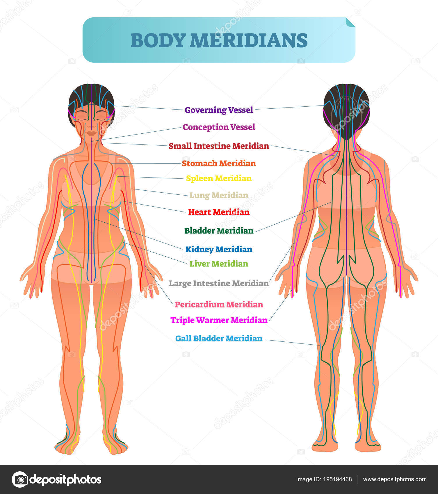 Esquema de ilustración vectorial cuerpo sistema de meridianos ...