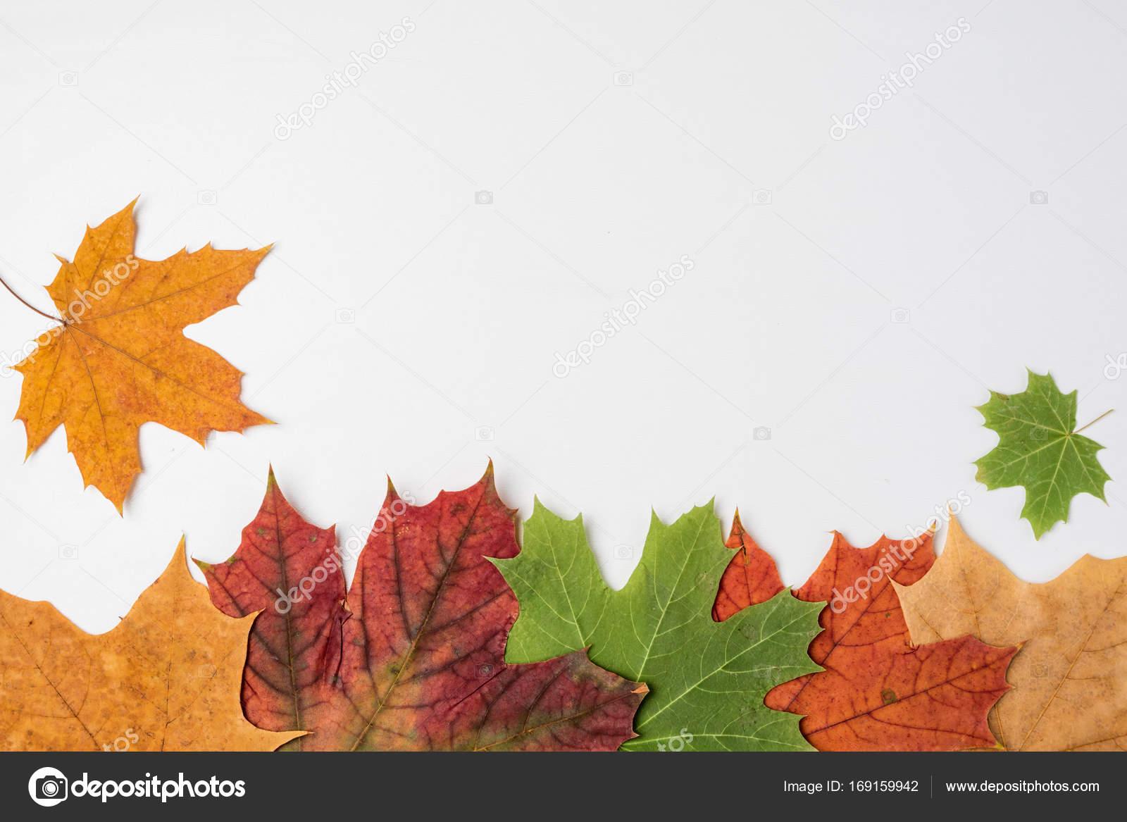 Composición de otoño. Marco de otoño arce hojas. Copia espacio ...