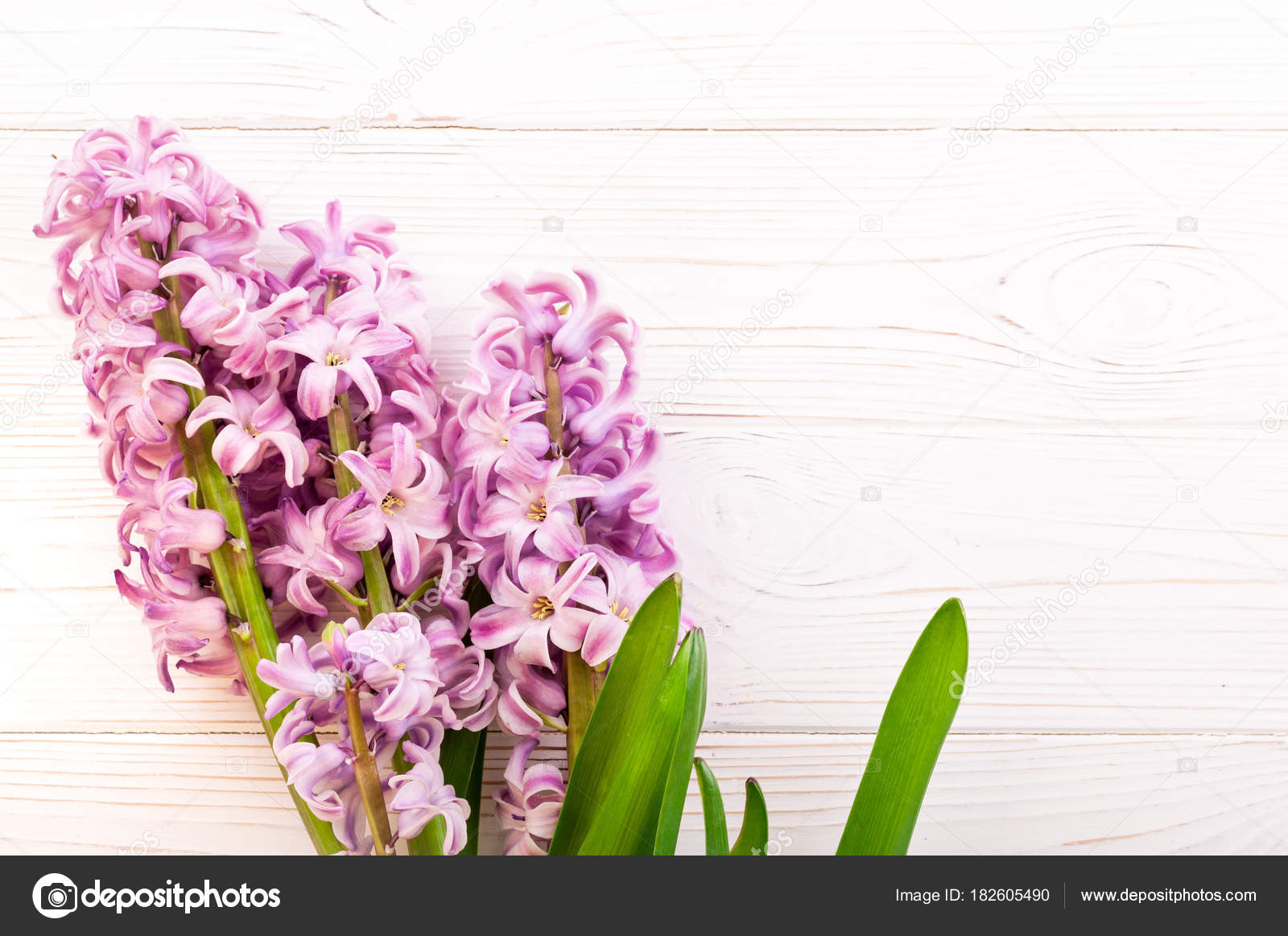Spring background with hyacinth flowers on white wooden table ...