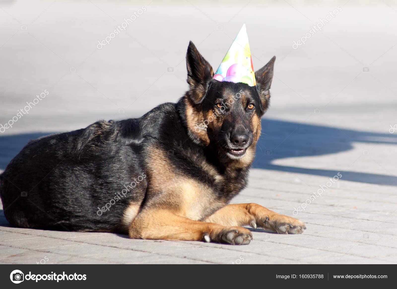 Grappige Hond Met Feest Hoed Viert Zijn Verjaardag Stockfoto